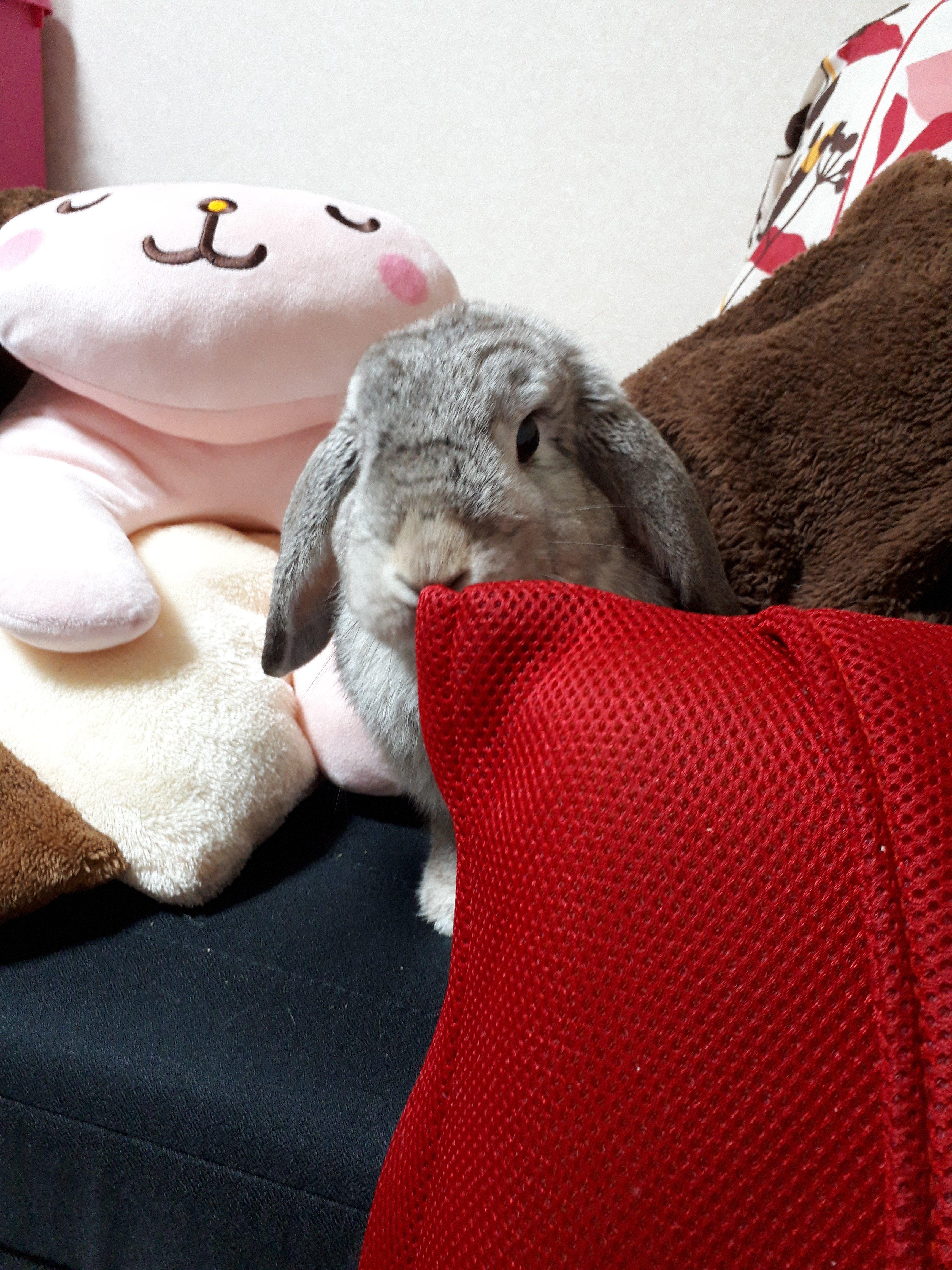 小悪魔ウサギ