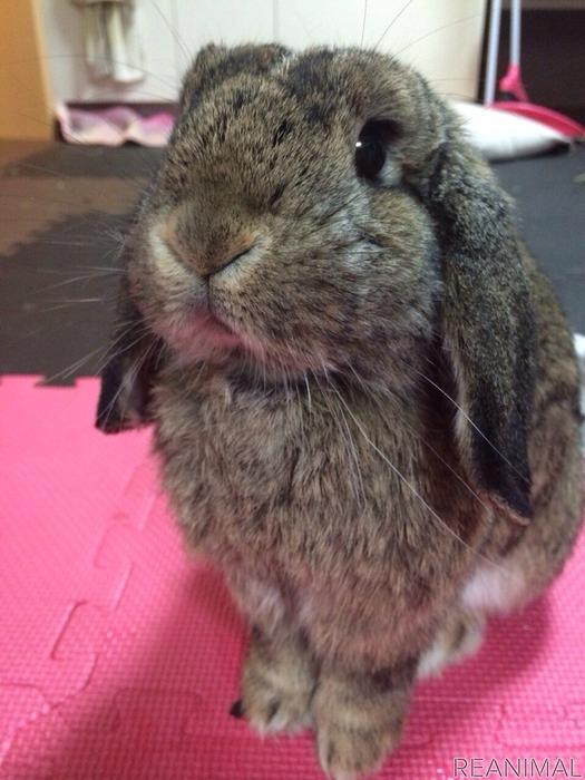 【ズボラ女子とわがままウサギ vol.1】先代・けだまと出会っちゃった日の話