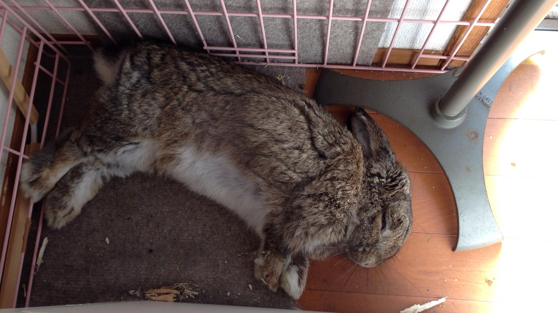 【ズボラ女子とわがままウサギ vol.4】食欲不振は緊急事態! ウサギの不調の見分け方