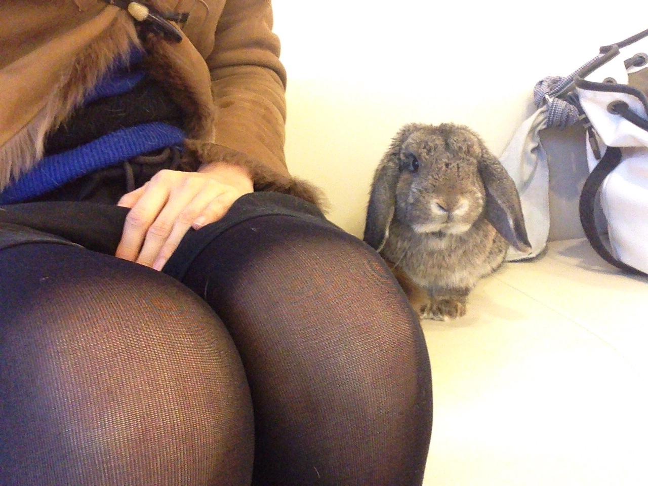 【ズボラ女子とわがままウサギ vol.5】けだまとの突然のお別れ…今でも後悔していること