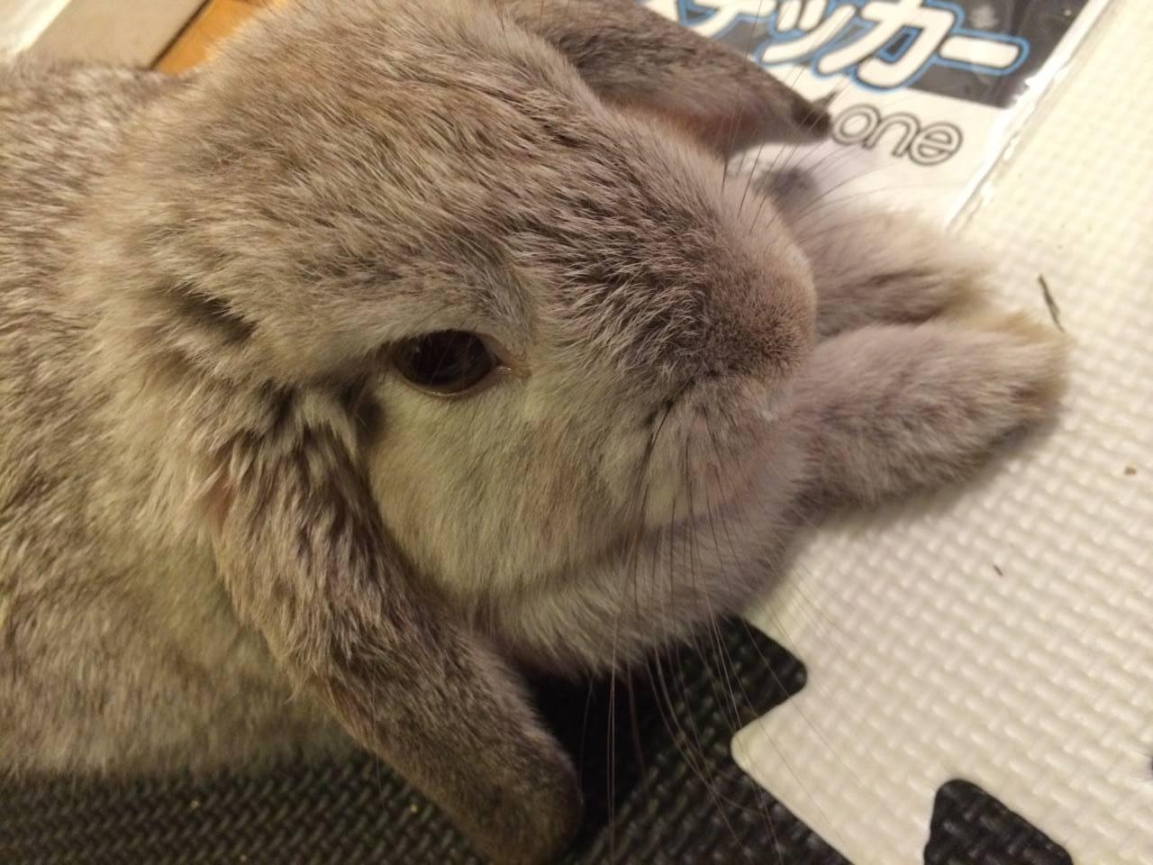 【ズボラ女子とわがままウサギ vol.6】「けだま」ロスの克服と「けまり」との出会い