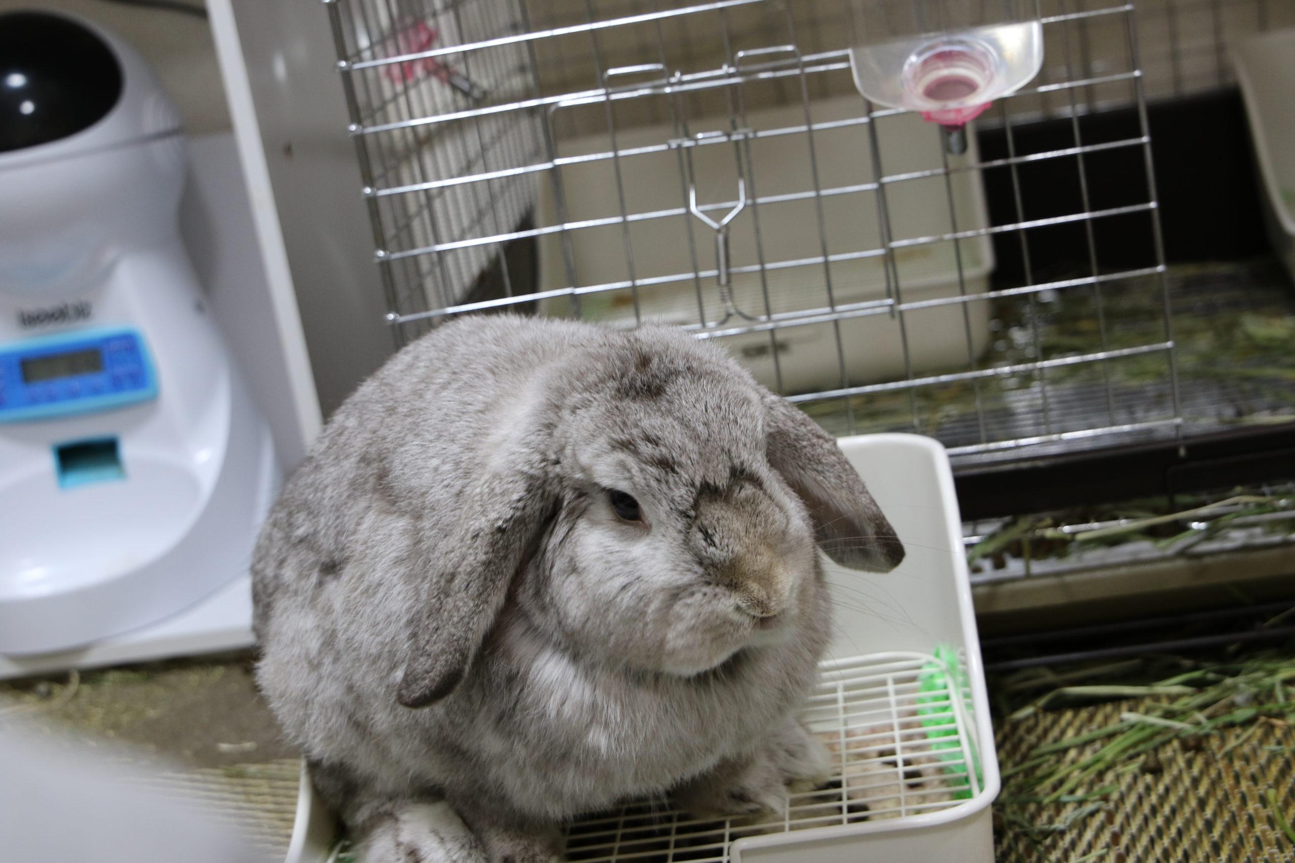 【ズボラ女子とわがままウサギ vol.8】「けまり」の不思議な習慣とチモシーの重要性