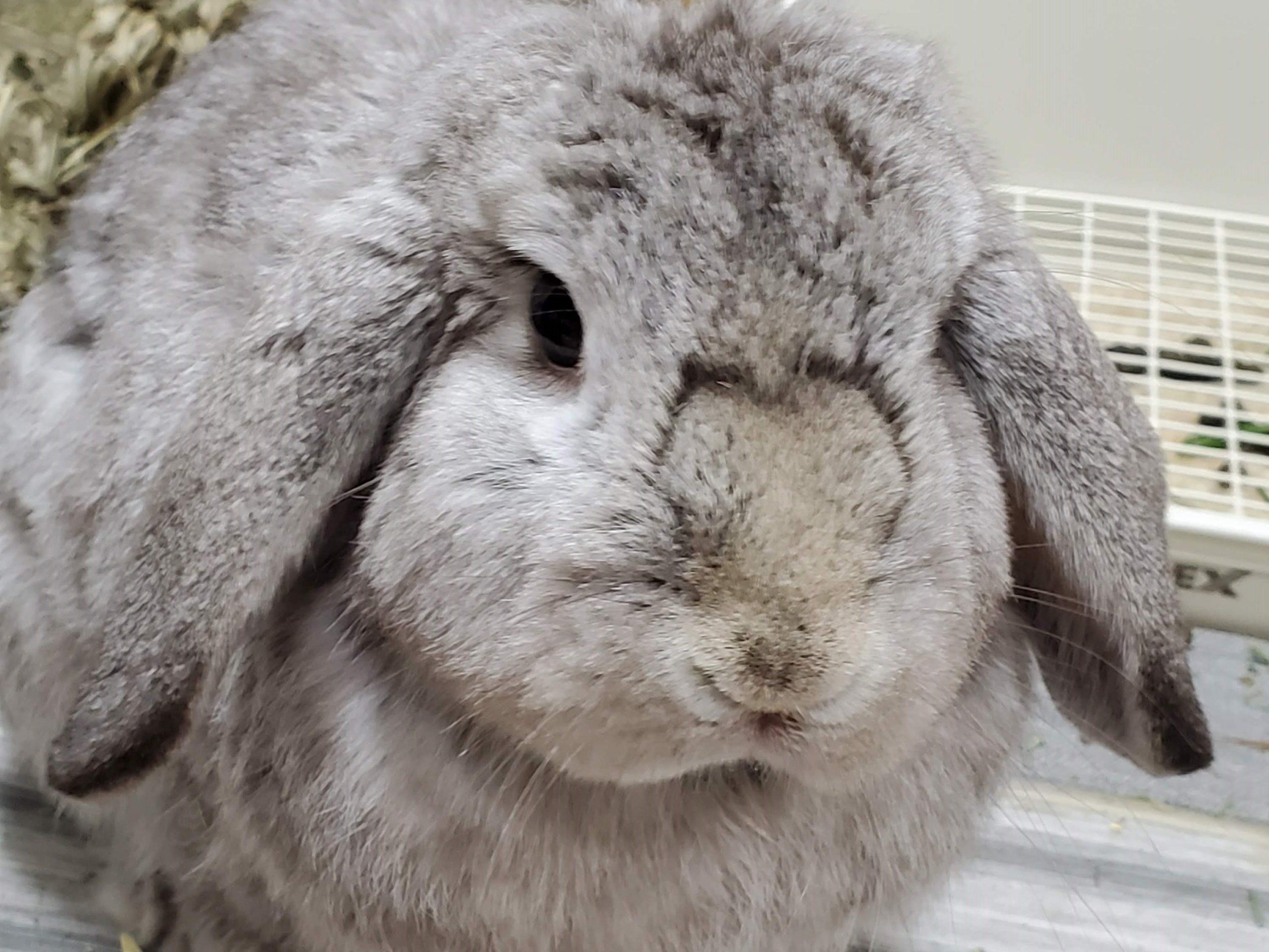 【ズボラ女子とわがままウサギ vol.9】ニンジンはダメ!? ウサギに与える食べ物の重要性
