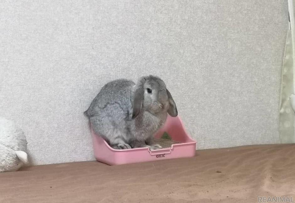 【ズボラ女子とわがままウサギ vol.11】元気があっても健康とは限らない!? ウサギと暮らす難しさ