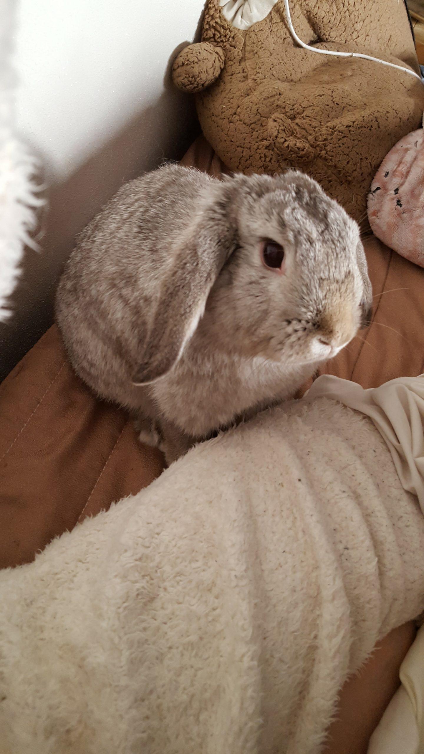 【ズボラ女子とわがままウサギ vol.17】ペットのお葬式について…過去の後悔